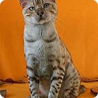 Adopt A Pet :: Denali - Davis, CA