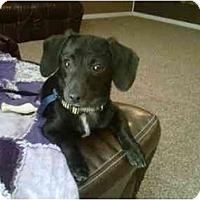 Adopt A Pet :: Ruthie - Arlington, TX