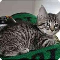 Adopt A Pet :: Tiptoe - Reston, VA