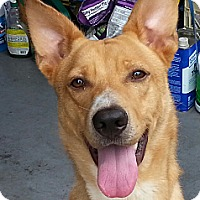 Adopt A Pet :: Dakota - Orlando, FL