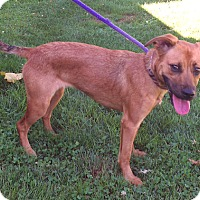Adopt A Pet :: Tessa - Metamora, IN