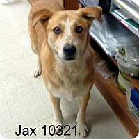 Adopt A Pet :: Jax - baltimore, MD