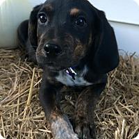 Adopt A Pet :: Blue Boy - Zanesville, OH