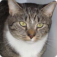 Adopt A Pet :: Bennee - Colmar, PA