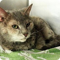Adopt A Pet :: C-66309 Kitty **Pets with Perks** - Westampton, NJ