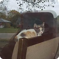 Adopt A Pet :: Penelope - Fairborn, OH