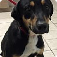 Adopt A Pet :: Tanner - Las Vegas, NV