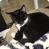 Adopt A Pet :: Tyler - Gadsden, AL