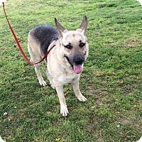 Adopt A Pet :: Sam - Nashua, NH