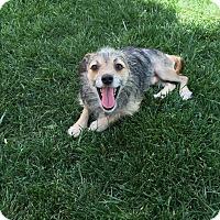Adopt A Pet :: Jiggy - Studio City, CA