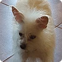 Adopt A Pet :: Olivia - Tucson, AZ