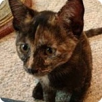 Adopt A Pet :: Calli - McHenry, IL