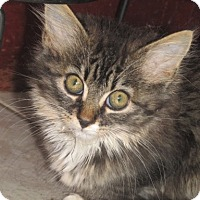Adopt A Pet :: Kenny - Germantown, MD