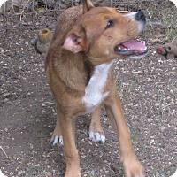 Adopt A Pet :: Sabine - Godley, TX