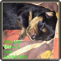 Adopt A Pet :: IRELAND - Pomfret, CT