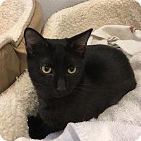 Adopt A Pet :: Rosie - Randleman, NC