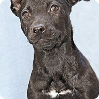 Adopt A Pet :: Nutelia - Encinitas, CA