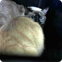 Adopt A Pet :: LEILA - Louisville, KY