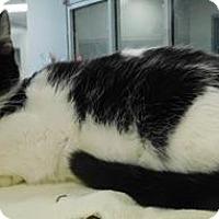 Adopt A Pet :: Alfie - Topeka, KS