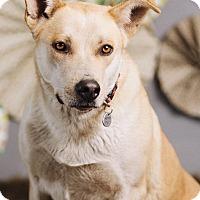 Adopt A Pet :: Betty - Portland, OR
