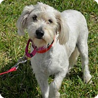 Adopt A Pet :: DOLLY - West Palm Beach, FL