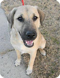 Bella | Adopted Dog | ...