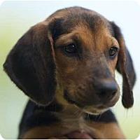 Adopt A Pet :: Roxie - Providence, RI
