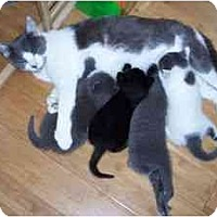 Adopt A Pet :: Pauline and kittens - Wakinsville, GA