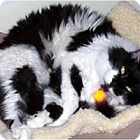 Adopt A Pet :: Paladin - Alexandria, VA