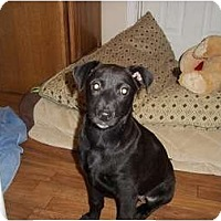 Adopt A Pet :: Morgan - Adamsville, TN