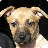Adopt A Pet :: Baby Garland - Oakley, CA