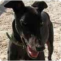 Adopt A Pet :: Eagle - St Petersburg, FL