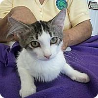 Adopt A Pet :: Barney - Bunnell, FL