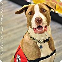 Adopt A Pet :: Malt! - Sacramento, CA