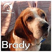 Adopt A Pet :: Brady - Novi, MI