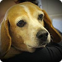 Adopt A Pet :: Janet - Schaumburg, IL