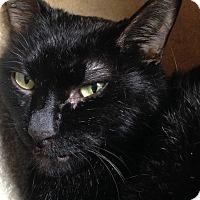 Adopt A Pet :: Strider - Chicago, IL