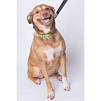 Adopt A Pet :: Booba - Jupiter, FL
