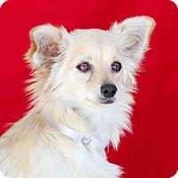 Adopt A Pet :: Blanca - San Marcos, CA