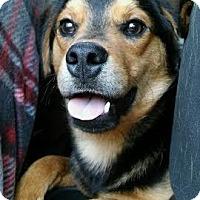Adopt A Pet :: Waylon - Providence, RI