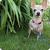 Adopt A Pet :: STELLA - Traverse City, MI