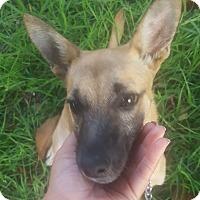 Adopt A Pet :: Lolo - Beverly Hills, CA