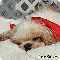 Adopt A Pet :: Sneezy - Mooresville, NC
