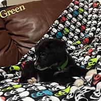 Adopt A Pet :: Green - DeForest, WI