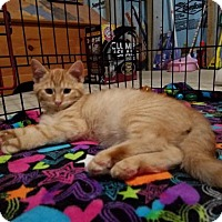 Adopt A Pet :: Tin Man - Parker Ford, PA