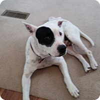 Adopt A Pet :: Quinn - Monroe, NJ