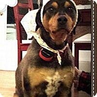 Adopt A Pet :: Flakko COURTESY POST - Baltimore, MD