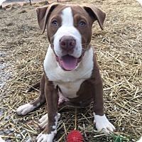 Adopt A Pet :: Zorro - Allentown, NJ
