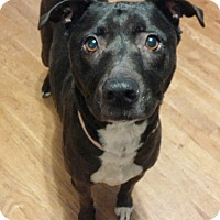 Adopt A Pet :: Maya - House Springs, MO