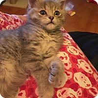 Adopt A Pet :: Gidget - Butner, NC